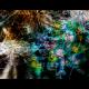 Frisky Glitter NFT preview