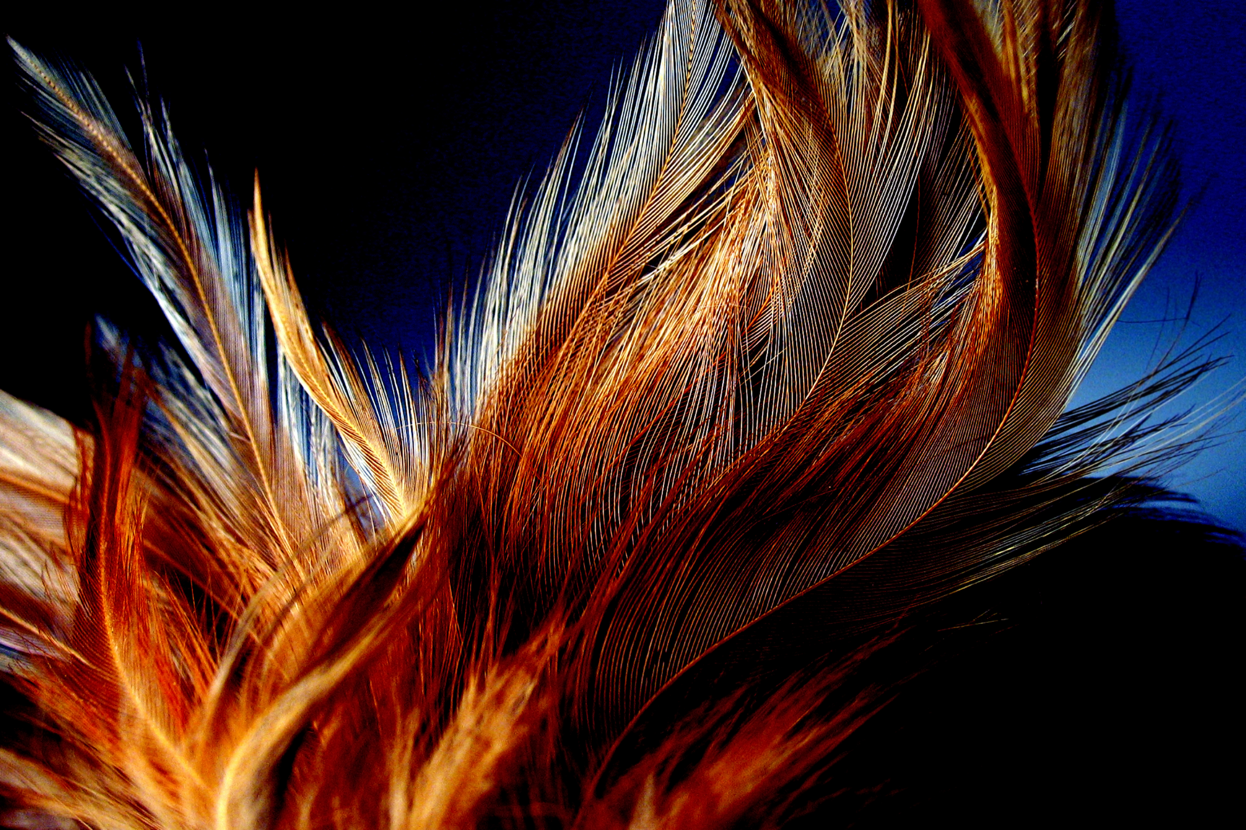 Honey Dust Feathers