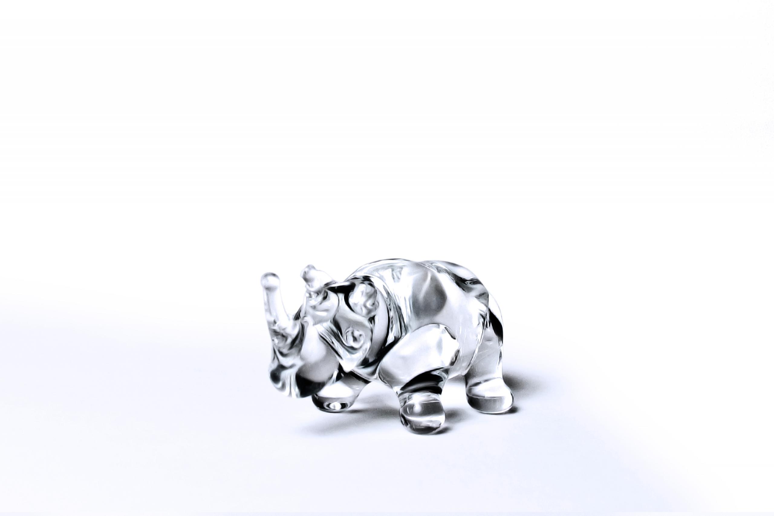 Glass Rhino
